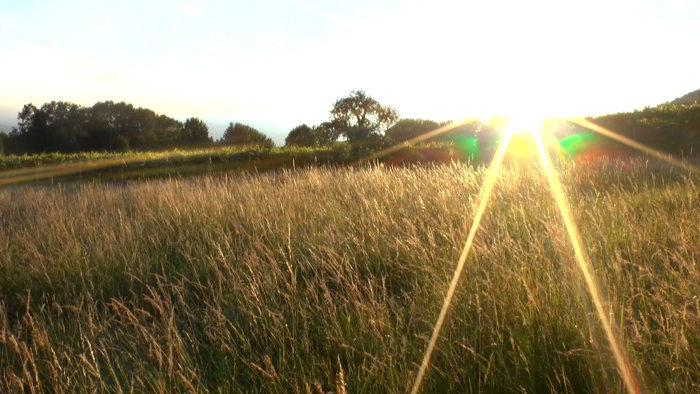 campo al tramonto_700